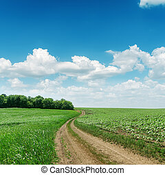 road in green fields and blue sky with clouds