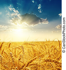 sunset over field with golden harvest