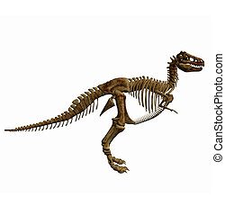 trex skeleton isolated on white