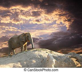 Elephant at sunset - Stately african elephant at sunset