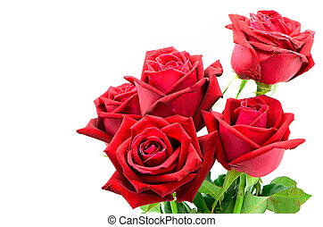 red rose - Beautiful red rose isolated on white