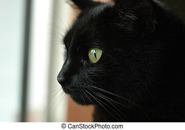 black cat face starring outside
