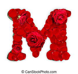 Letter M made from red roses and petals isolated on a white...