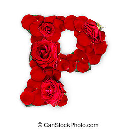 Letter P made from red roses and petals isolated on a white...