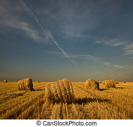 Landscape. Straw bales in the field. Evening. - Straw bales...