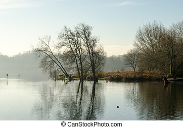 Morning Mist on the Lake - View over a lake through the...