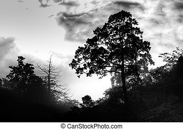 silhouette of tree - It is silhouette of tree with black and...