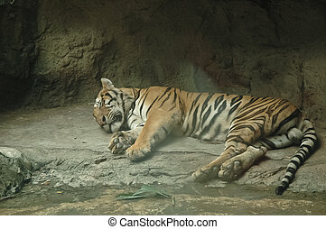 Giant orange stripes tiger sleeping and lying down