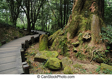 Winding stair steps in humid forest in Taiwan