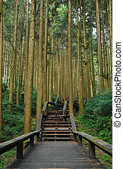 Stairways to bamboo ancient forest
