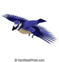 Florida Jay Bird - 3D digital render of a flying songbird...