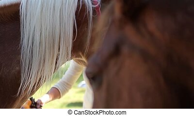 2 Horses, Head Closeup (Animals)