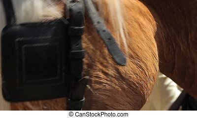 Horse, Head Closeup Animals