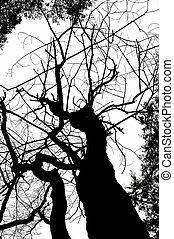 dead tree silhouete - monochrome dead tree silhouete...