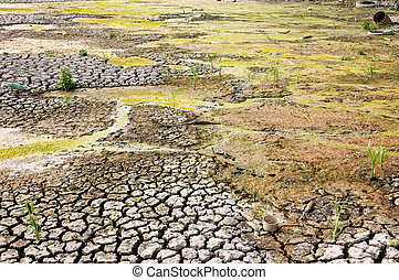 wasteland - drying dirty wasteland with cracked surface due...