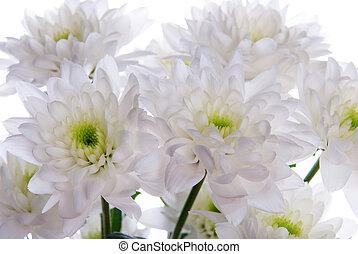 fin, blanc, fleurs, haut