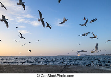 gulls above an evening sea in city Sevastopol