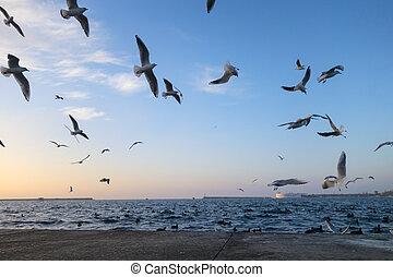 Gaviotas, sobre, tarde, mar