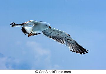 Freedom - Free seagull hovering in the sky. Embodiment of...