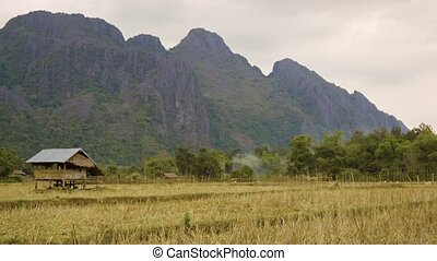 Rice fields in Laos. Crop is harvested