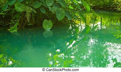 Beach of tropical river in the forest
