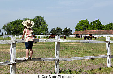 child standing on corral and watching horses on farm