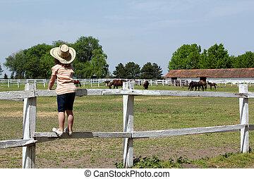 enfant, debout, corral, regarder, chevaux, ferme
