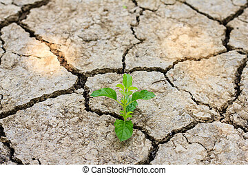green tree growing through dry cracked soil - Fresh green...