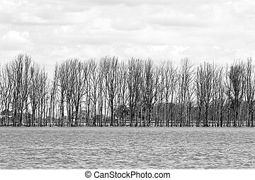 Row of trees in flooded landscape