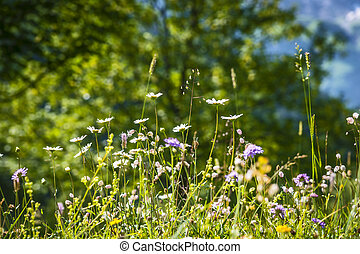 Meadow with wild flowers - Image of a meadow with wild...