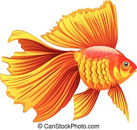 vector illustration of a goldfish - Realistic and detailed...