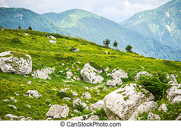 Green Valley with Mountains Landscape on background Summer day
