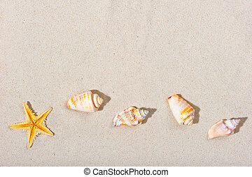 beautiful beach sand and sea creatures