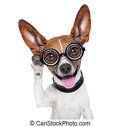 dog listening - silly dog listening careful with one very...