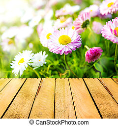 Spring background daisies wooden panel - Spring background...