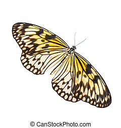 Idea leuconoe butterfly isolated on white background