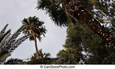 Tropical palms with green leaves - Different types of palm...