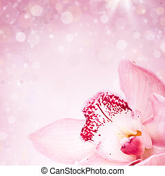 Pink orchid on blured background