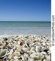 Sea Shells by the Seashore - Shells abound in the Gulf of...