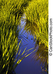 Water Path in wetlands - Lovely Wetlands vegetation trying...