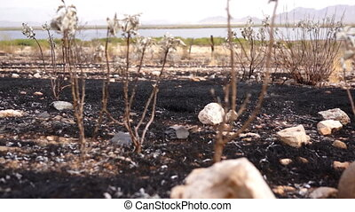 Burned Scarred Land Dolly - Close up dolly shot of the...