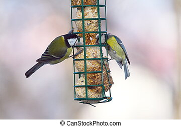 great and blue tits on feeder - great tit ( parus major )...