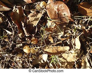 Hojas secas en el piso - hojas secas con a frutos en el piso...