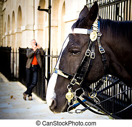 Guard horse in London - Man taking a photo of a horse of the...