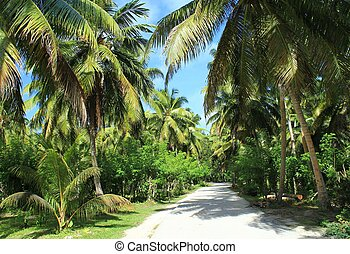 tropical garden - A way in a tropical plantation with...