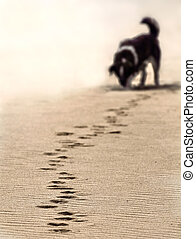 dog footstep - dog tracking footstep on the sand at the...