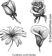 Flower set: highly detailed hand drawn vector.
