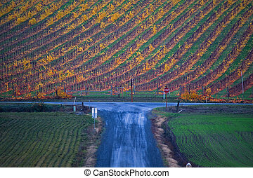 Autumn vineyard, blue road - A wet gravel road, shaded blue,...