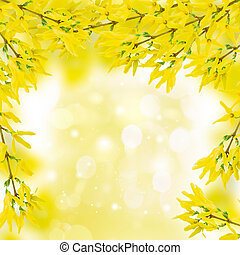 Forsythia twigs - Yellow spring forsythia twigs with flowers...