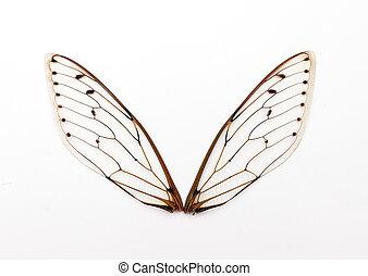 asas, cigarra